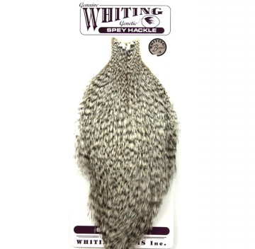 Whiting Rooster Spey Bronze Cape grizzly