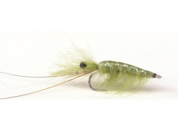 Olive CDC Shrimp #6