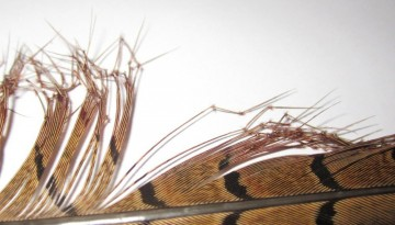 Semperfli Knotted Cranefly (Double) Legs Natural